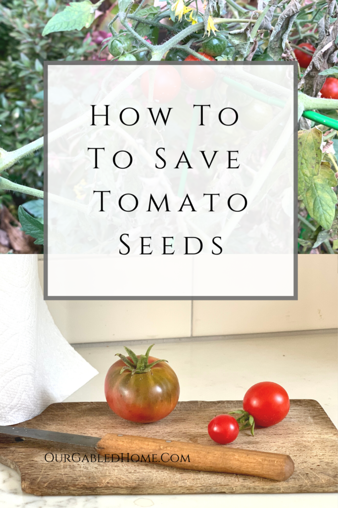 Learn my simple method to save tomato seeds for next year!